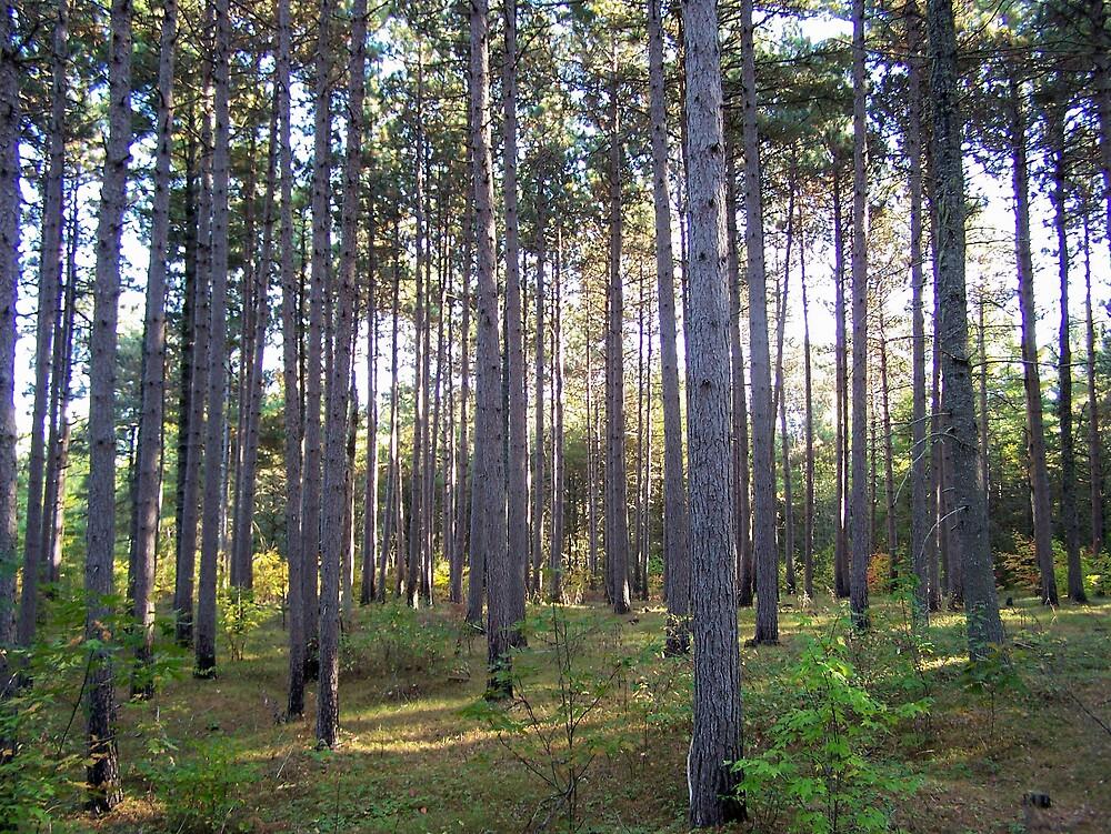 Forest Walk by Gene Cyr