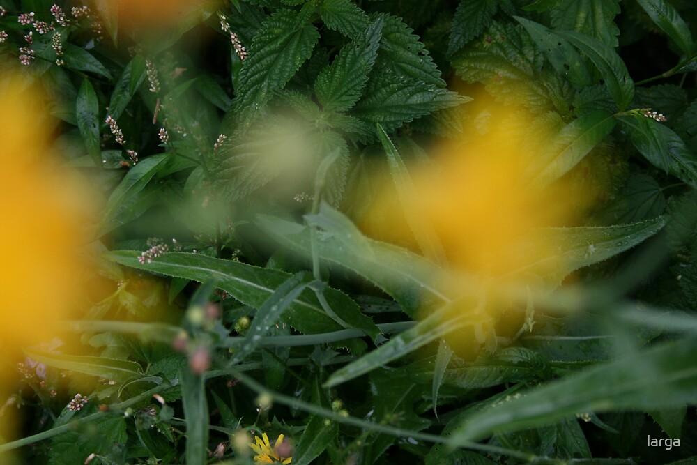 yellow mist by larga