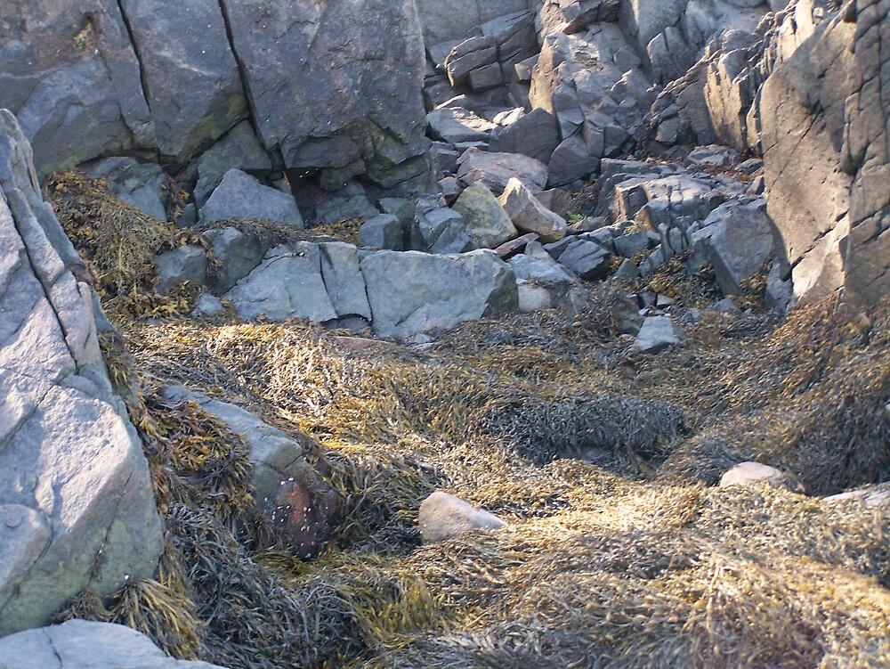 Low Tide Rocks by Gene Cyr