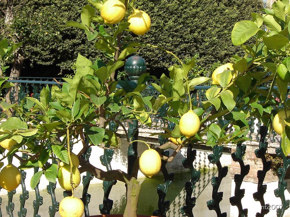 Lemon Tree by nt2007