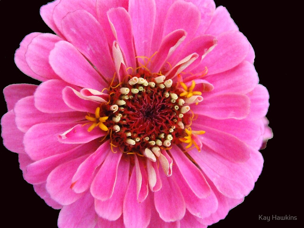 Pink and Black by Kay Hawkins