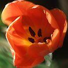 Orange Swirl by Ann Chane