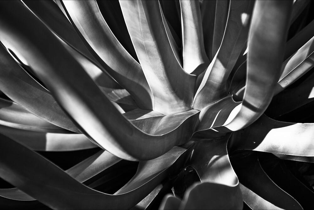 Succulent by Michael Mancini