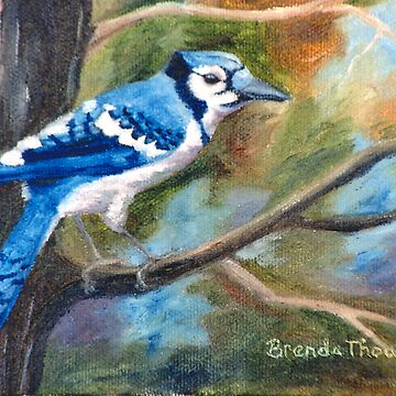 Blue Jay by bmthour