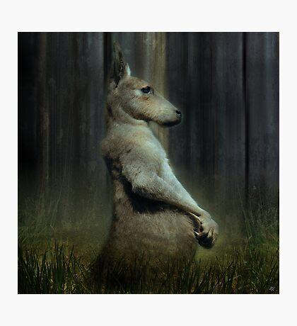 Portrait of a Kangaroo Photographic Print