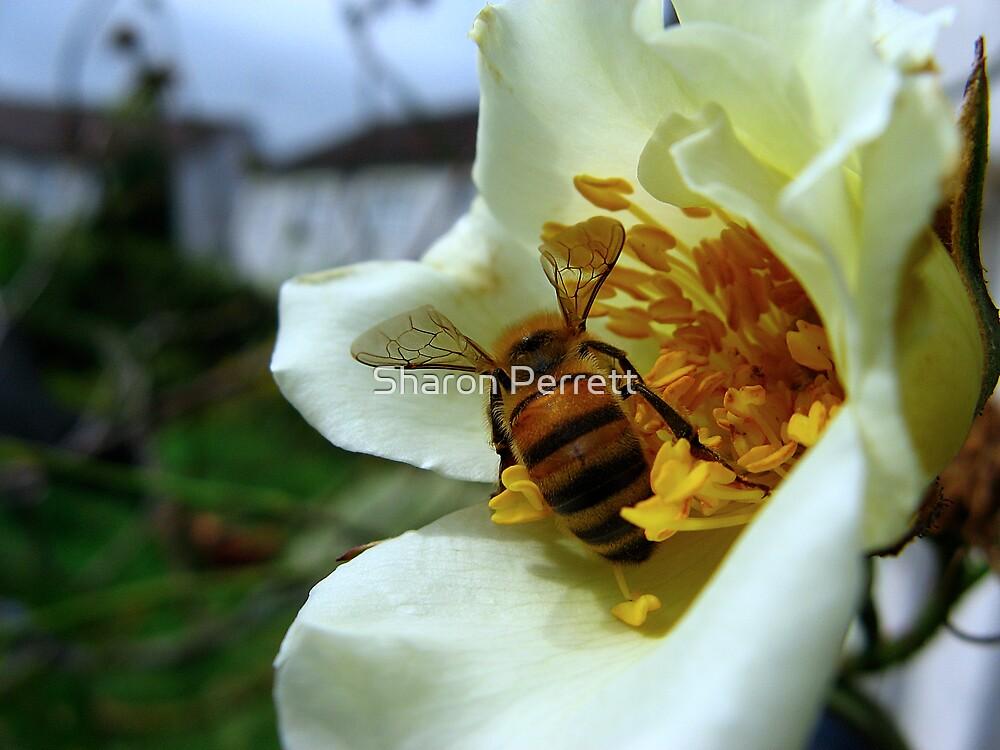 Beeutiful Wings by Sharon Perrett