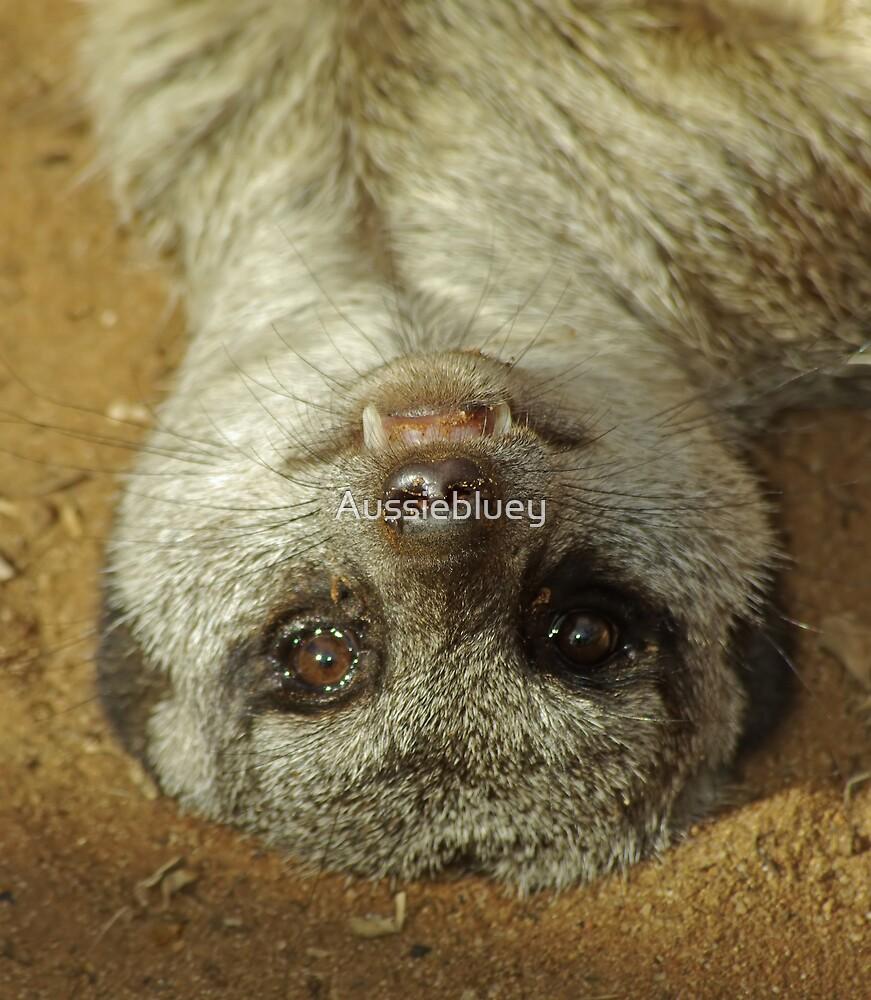 Meerkat by Aussiebluey