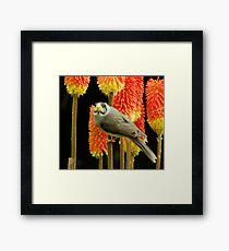Miner Bird Framed Print