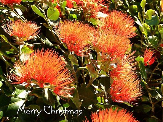 New Zealand Christmas Tree by Maureen Smith