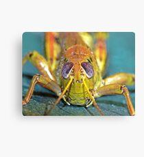 Grasshopper 1 ! Canvas Print