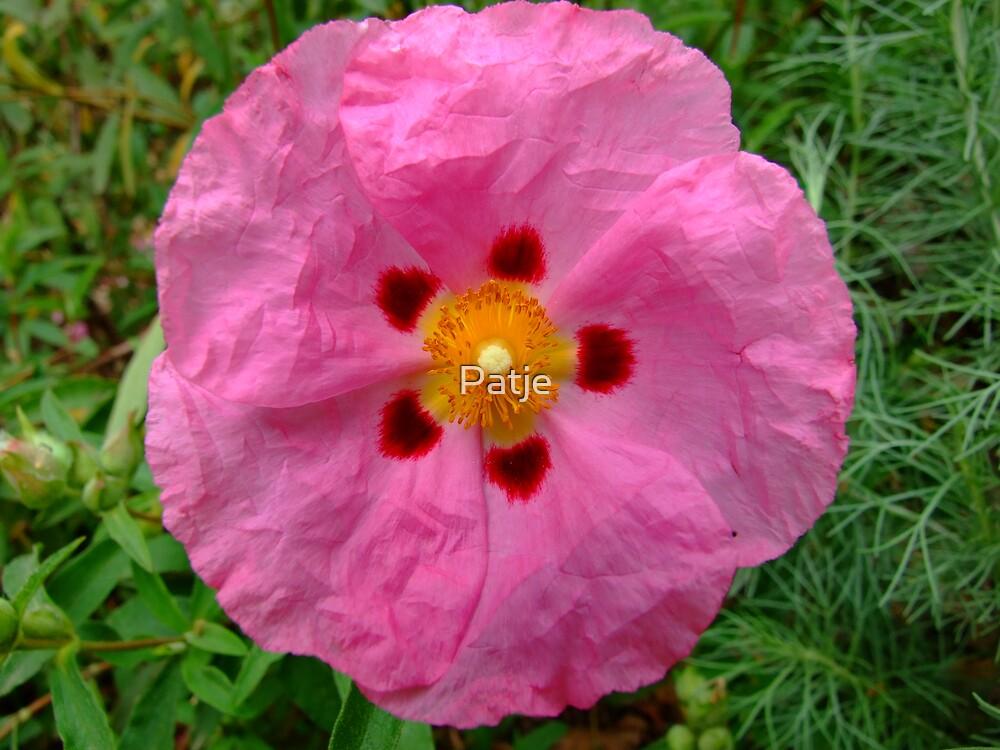 Paper flower by Patje