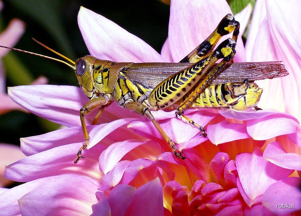 Grasshopper (full length) ! by robkal