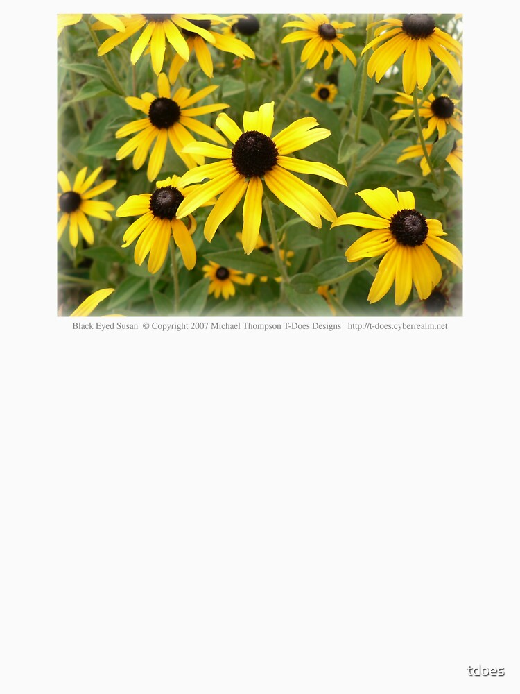 Black Eyed Susan by tdoes