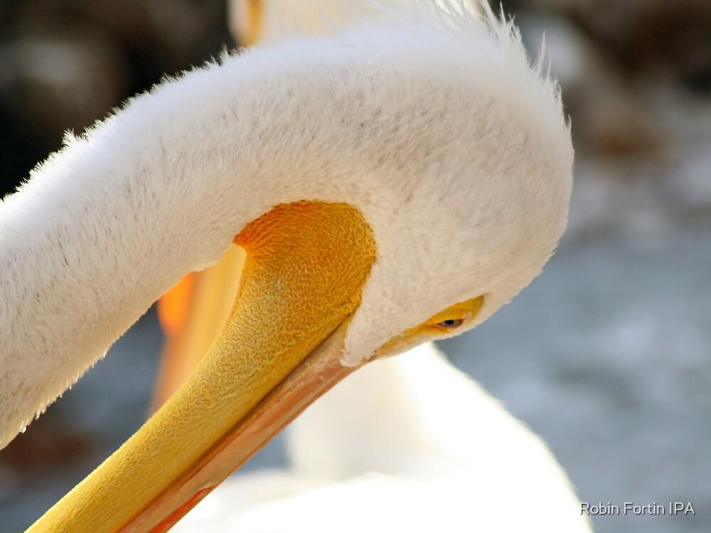 Shy Bird by Robin Fortin IPA
