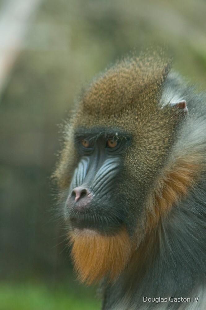 Primate by Douglas Gaston IV