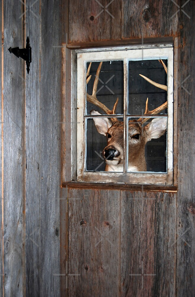 Buck Season by Maria Dryfhout