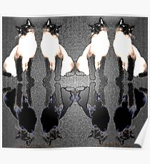Siamese Reflections Poster