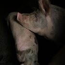 bored pigs.. by larga