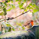 Robin by twinnieE