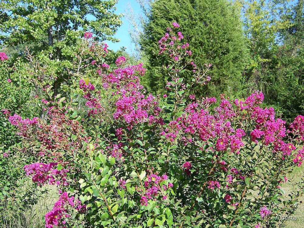 Pink Bush by Alberta