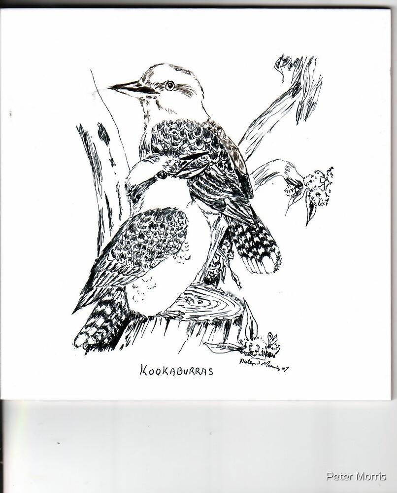 """""""Laughing Kookaburras by Peter Morris"""