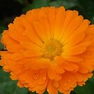 The future's bright - the future's Orange! by Andy Harris