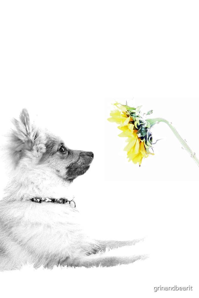 Dog & Flower by grinandbearit
