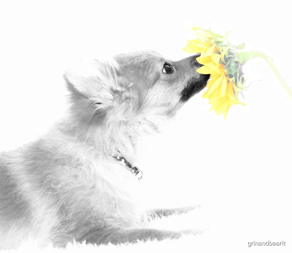 Dog & flower 2 by grinandbearit