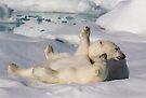 Polar Bear Cubs by Steve Bulford