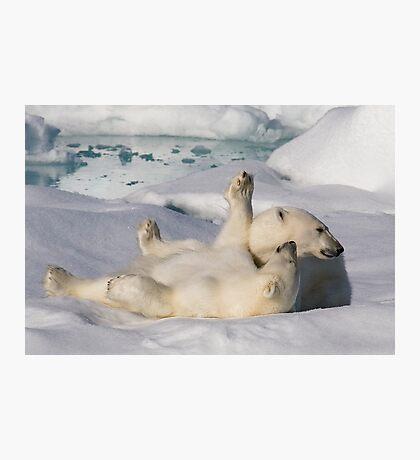 Polar Bear Cubs Photographic Print