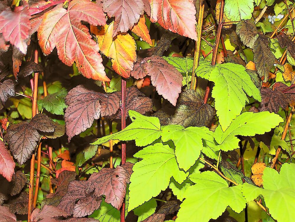 Leafy Colors by Gene Cyr