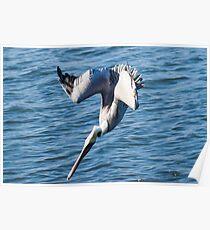 Diving Pelican Poster