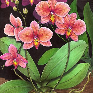 Phalaenopsis Orchid Study by twopurringcats
