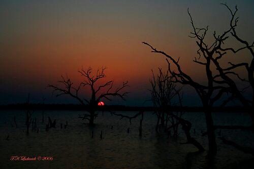 Sunset Trees by grinandbearit