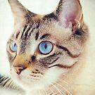 Blue eyed kitty by Silvia Ganora