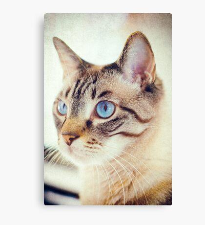 Blue eyed kitty Canvas Print