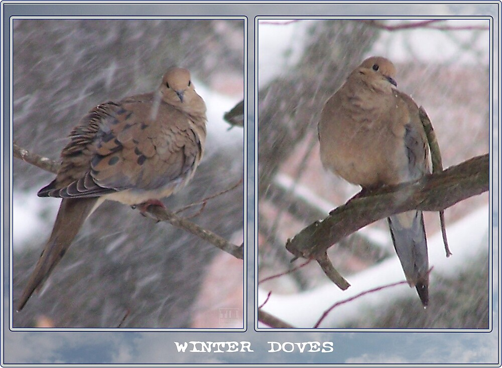 Winter Doves by tim100