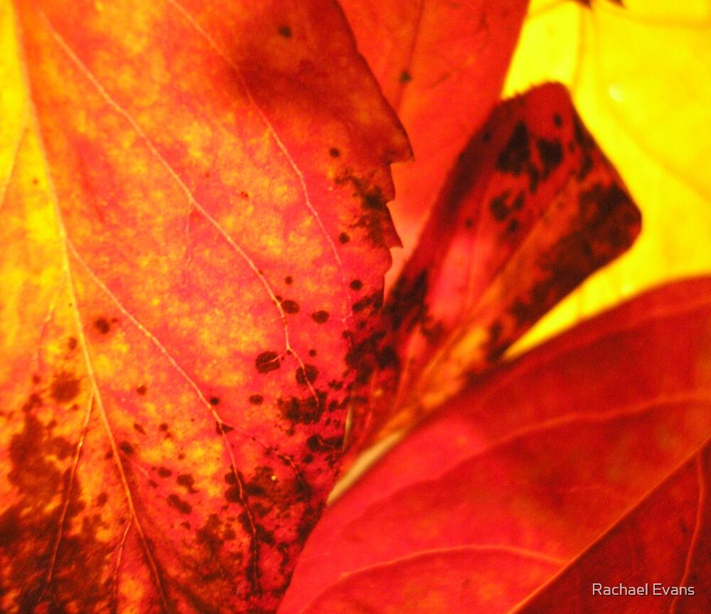 Autumnal by Rachael Evans
