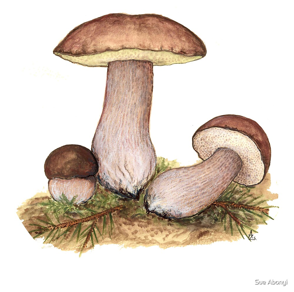King Bolete - Boletus edulis by Sue Abonyi