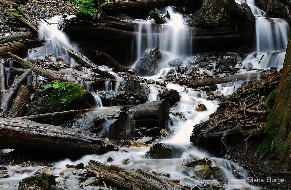 Waterfall by Diana  Burge
