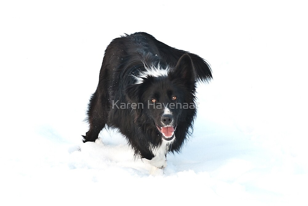 Snowdog by Karen Havenaar