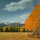East Glacier Aspens by Fred Frank