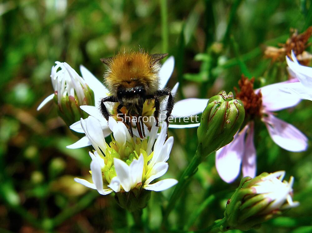 Beeutiful Bee by Sharon Perrett