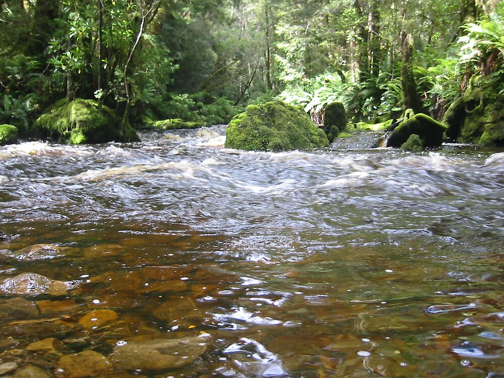 Bird River East Pillinger Tasmania by Bill McRobb