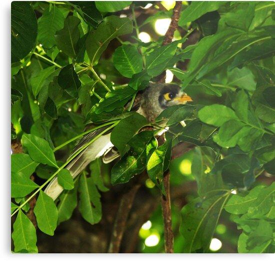 Birdy by Kate456