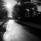 Sun Glare by David Lamb