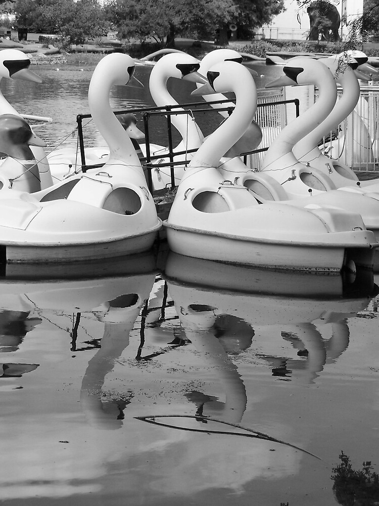 Swans on the Lake by whircat