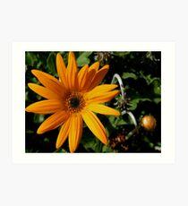 photoj Flora, Orange Delight  Art Print