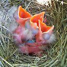 Baby Robins by hallucingenic
