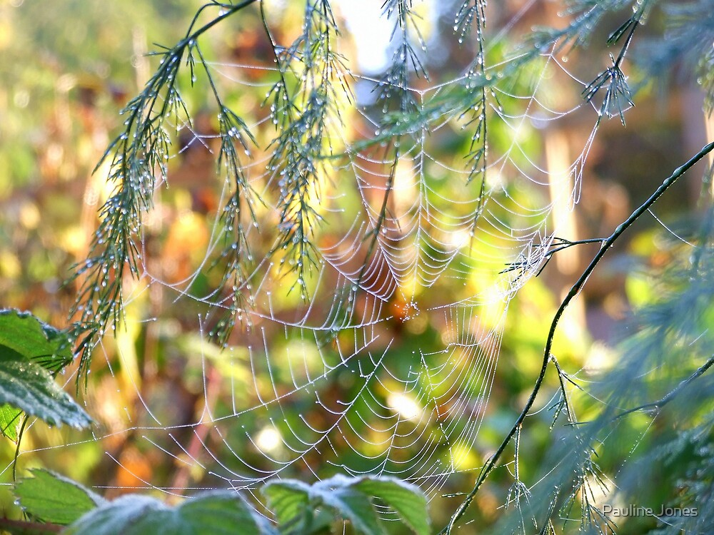 Morning Dew by Pauline Jones